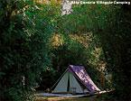 Baia Domizia Villaggio Camping Bild 3